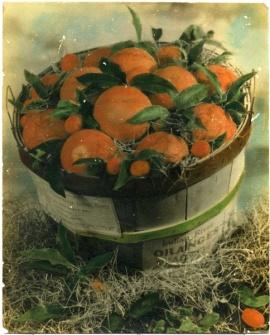 pointsettia-groves-basket-before